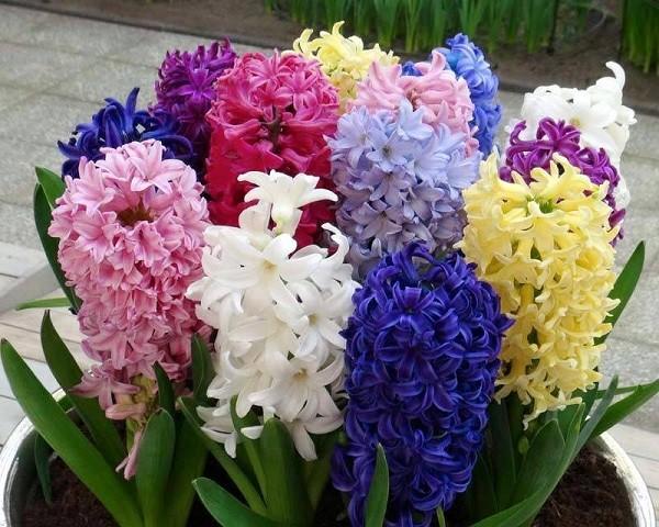 Năm mới cắm những loại hoa này, gia chủ vừa hạnh phúc vừa 'tiền vào như nước' ảnh 1