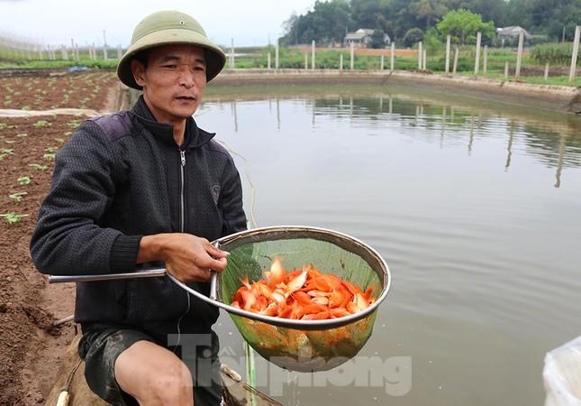 Làng nghề cá chép đỏ tất bật trước ngày ông Công ông Táo ảnh 5