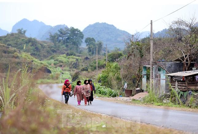 Đào rừng Hà Giang hé nụ đón năm mới 2021 ảnh 1