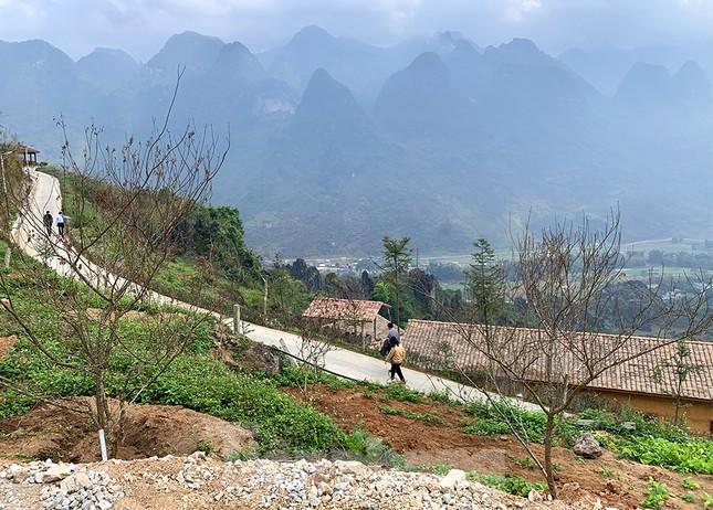 Đào rừng Hà Giang hé nụ đón năm mới 2021 ảnh 9