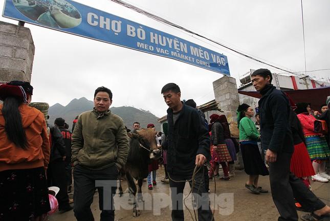 Lạc bước ở phiên chợ bò Mèo Vạc ảnh 12