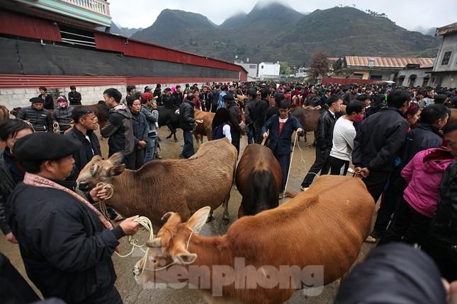 Lạc bước ở phiên chợ bò Mèo Vạc ảnh 2
