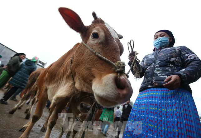 Lạc bước ở phiên chợ bò Mèo Vạc ảnh 4