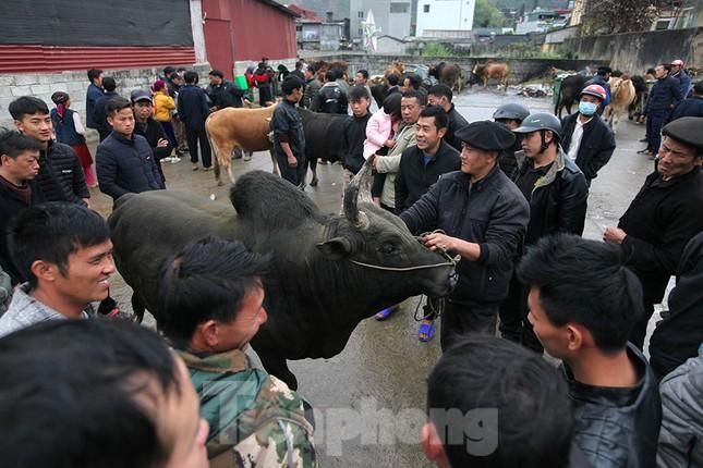 Lạc bước ở phiên chợ bò Mèo Vạc ảnh 6