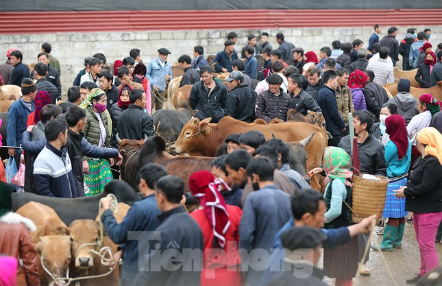 Lạc bước ở phiên chợ bò Mèo Vạc ảnh 8