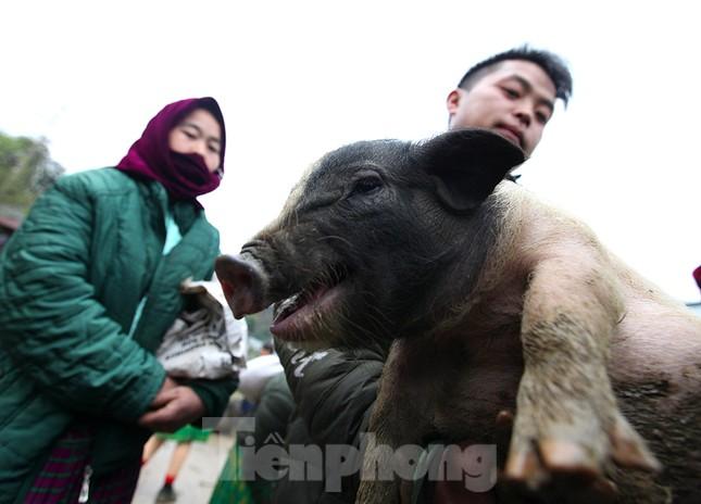 Cách chọn mua lợn 'có một không hai' ở chợ phiên Mèo Vạc ảnh 10