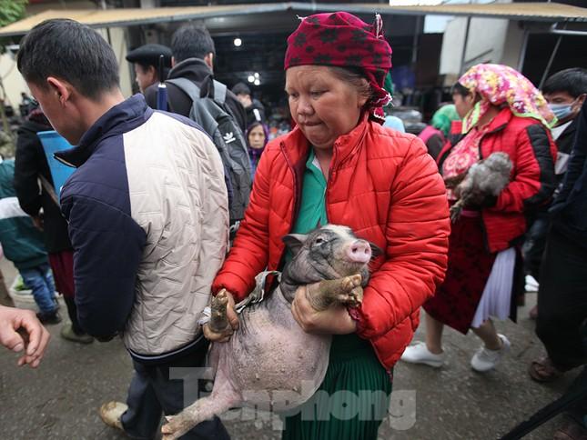 Cách chọn mua lợn 'có một không hai' ở chợ phiên Mèo Vạc ảnh 14