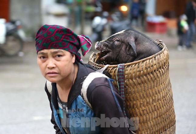 Cách chọn mua lợn 'có một không hai' ở chợ phiên Mèo Vạc ảnh 1