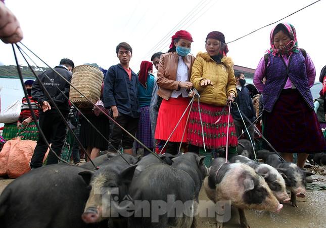 Cách chọn mua lợn 'có một không hai' ở chợ phiên Mèo Vạc ảnh 2