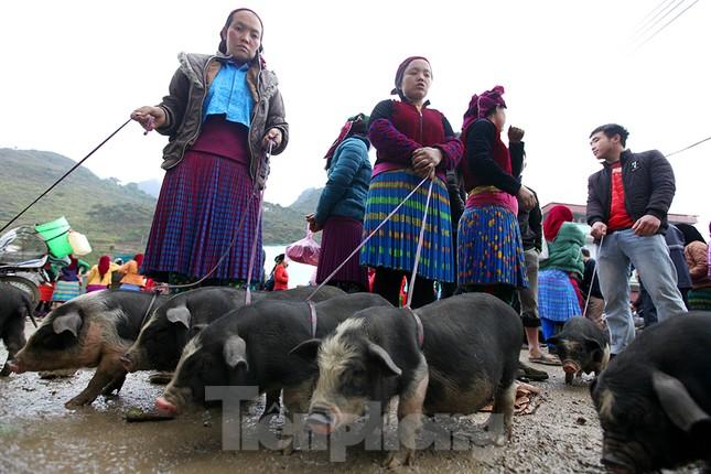Cách chọn mua lợn 'có một không hai' ở chợ phiên Mèo Vạc ảnh 3