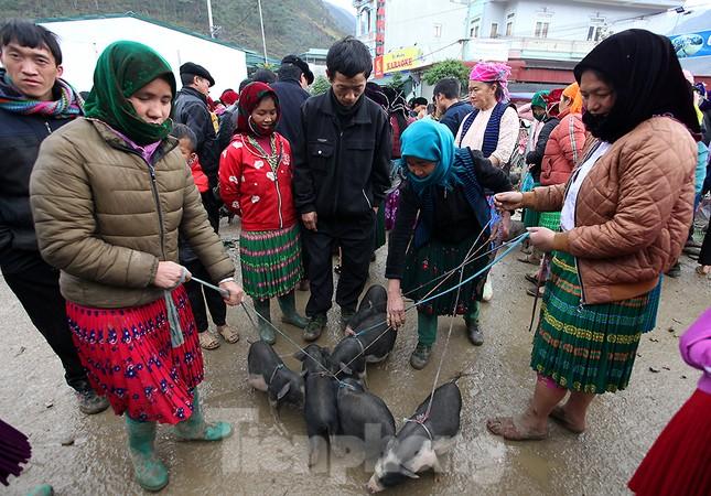 Cách chọn mua lợn 'có một không hai' ở chợ phiên Mèo Vạc ảnh 4