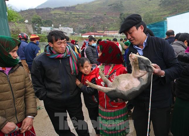 Cách chọn mua lợn 'có một không hai' ở chợ phiên Mèo Vạc ảnh 5