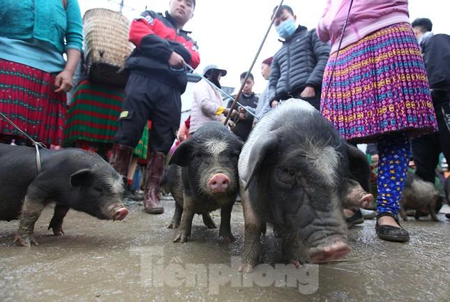 Cách chọn mua lợn 'có một không hai' ở chợ phiên Mèo Vạc ảnh 7