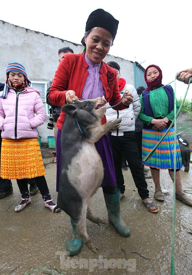 Cách chọn mua lợn 'có một không hai' ở chợ phiên Mèo Vạc ảnh 11