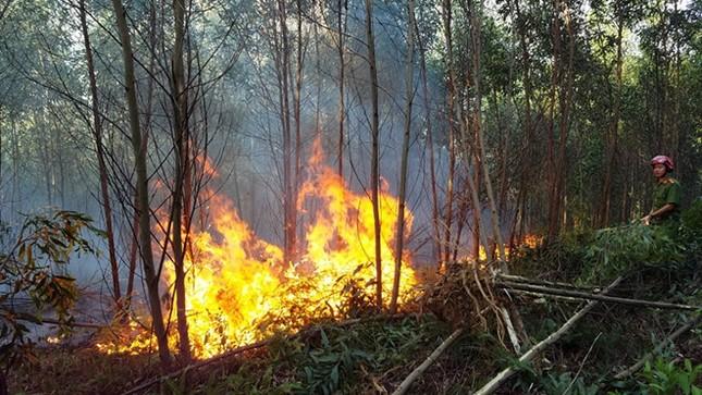 Cháy rừng cùng lúc tại nhiều phường ở TT-Huế ảnh 1