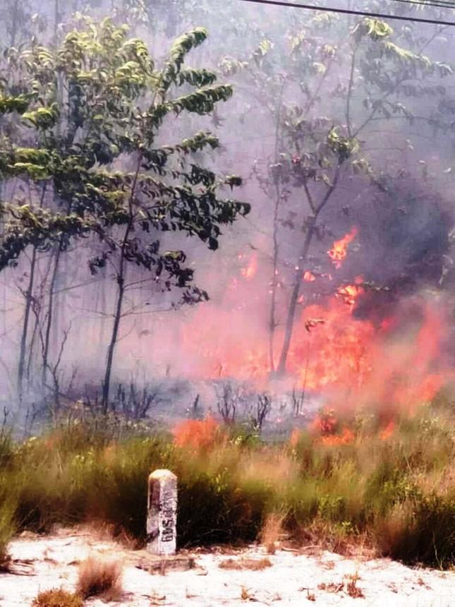 Lại cháy rừng dữ dội tại TT-Huế, biển lửa trùm lên 20ha cây lâm nghiệp tái sinh ảnh 4