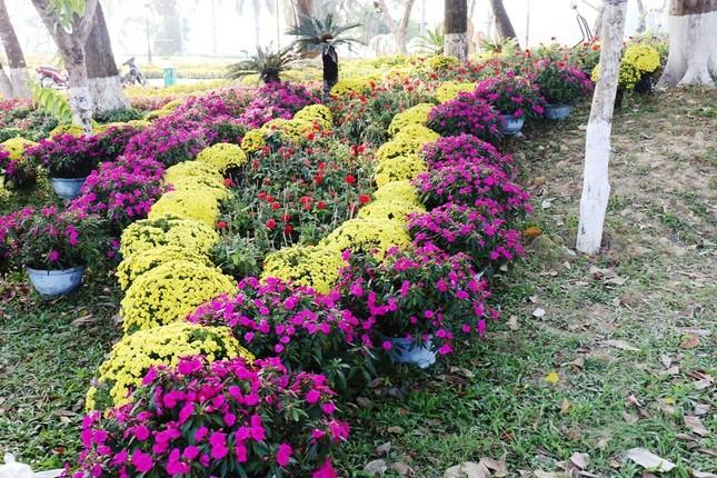 Nhìn ngắm Huế ngày cuối năm khoác 'áo hoa' lạ lẫm đón Tết ảnh 26