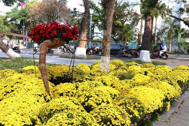 Nhìn ngắm Huế ngày cuối năm khoác 'áo hoa' lạ lẫm đón Tết ảnh 29