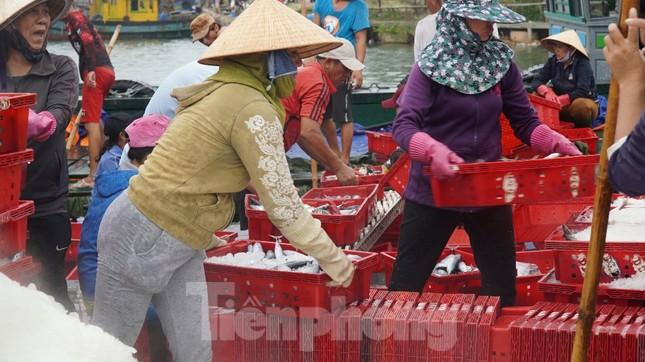 Ngư dân TT-Huế hối hả với những mẻ cá biển cuối cùng trước bão ảnh 1