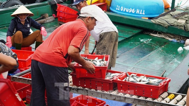 Ngư dân TT-Huế hối hả với những mẻ cá biển cuối cùng trước bão ảnh 4