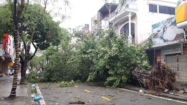 'Cụ' xà cừ số 13 cổ nhất tại Huế bị bão cùng tên quật đổ bật cả gốc gây tiếc nuối ảnh 15