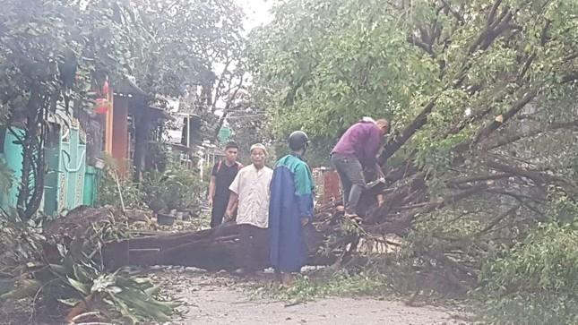 'Cụ' xà cừ số 13 cổ nhất tại Huế bị bão cùng tên quật đổ bật cả gốc gây tiếc nuối ảnh 16