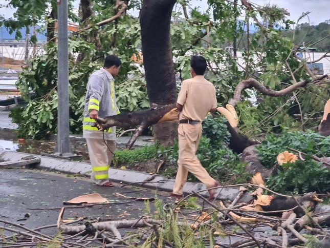 'Cụ' xà cừ số 13 cổ nhất tại Huế bị bão cùng tên quật đổ bật cả gốc gây tiếc nuối ảnh 13