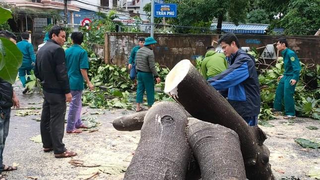 'Cụ' xà cừ số 13 cổ nhất tại Huế bị bão cùng tên quật đổ bật cả gốc gây tiếc nuối ảnh 14