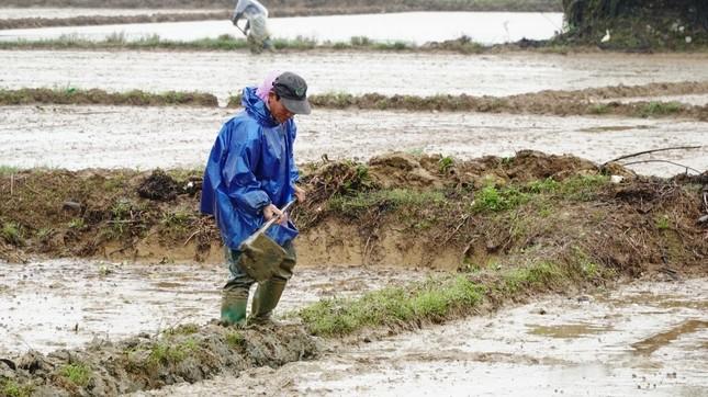 Nông dân Huế xuống đồng dầm mình giữa mưa rét như cắt da thịt ảnh 2