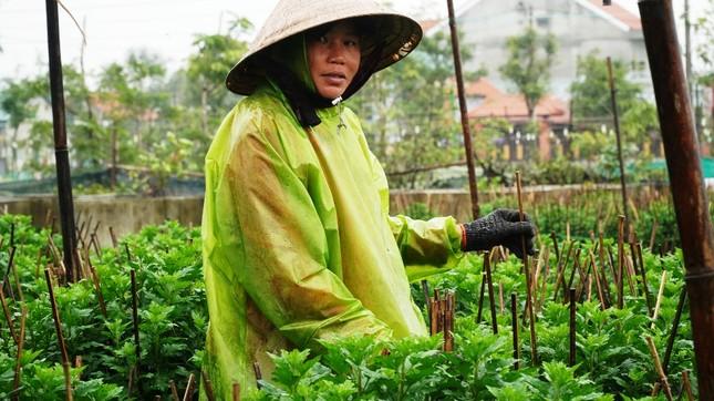 Nông dân Huế xuống đồng dầm mình giữa mưa rét như cắt da thịt ảnh 10