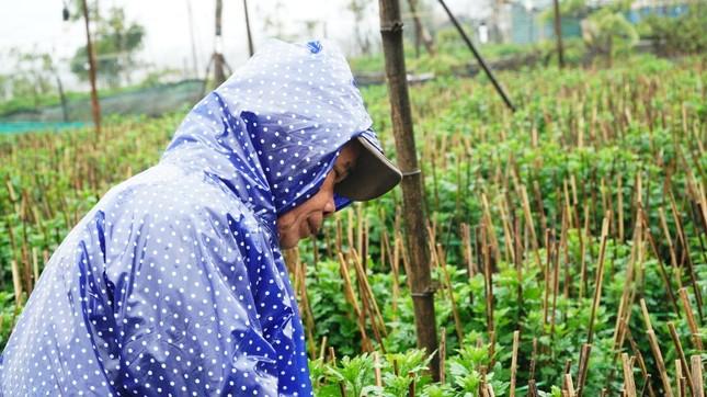 Nông dân Huế xuống đồng dầm mình giữa mưa rét như cắt da thịt ảnh 9