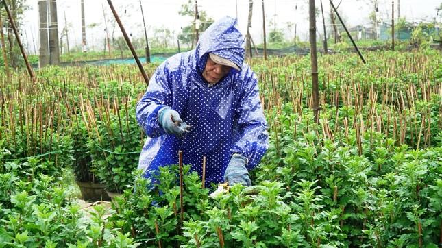 Nông dân Huế xuống đồng dầm mình giữa mưa rét như cắt da thịt ảnh 8
