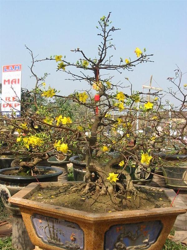 Vì sao Huế bất ngờ cấm họp chợ hoa Tết trên vỉa hè nhiều phố trung tâm? ảnh 1