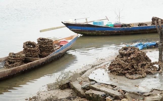 Công bố nghiên cứu khoa học nghề nuôi hàu lạ lùng 'đầu độc' đầm nước danh thắng Lăng Cô ảnh 2