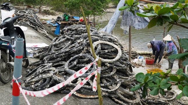 Công bố nghiên cứu khoa học nghề nuôi hàu lạ lùng 'đầu độc' đầm nước danh thắng Lăng Cô ảnh 3