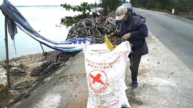 Công bố nghiên cứu khoa học nghề nuôi hàu lạ lùng 'đầu độc' đầm nước danh thắng Lăng Cô ảnh 4