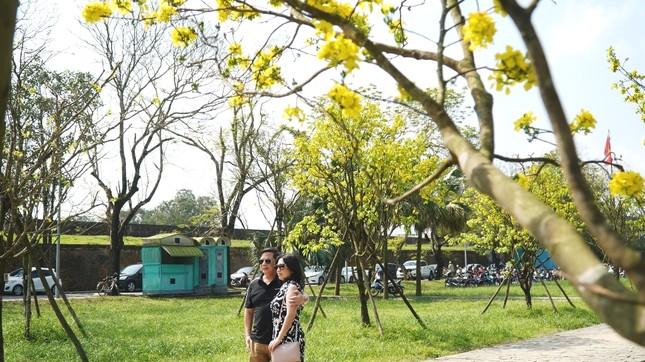 Chủ tịch tỉnh kêu gọi xây dựng Huế thành 'xứ sở mai vàng' của Việt Nam ảnh 5