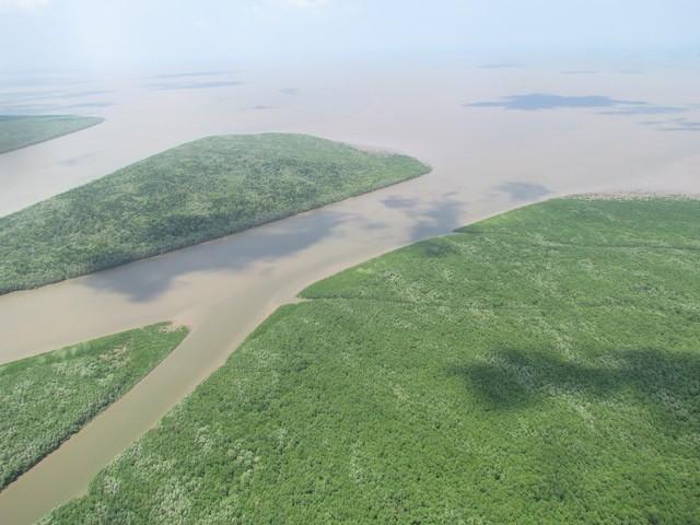 Cách chức giám đốc, phó giám đốc vườn quốc gia Mũi Cà Mau ảnh 3