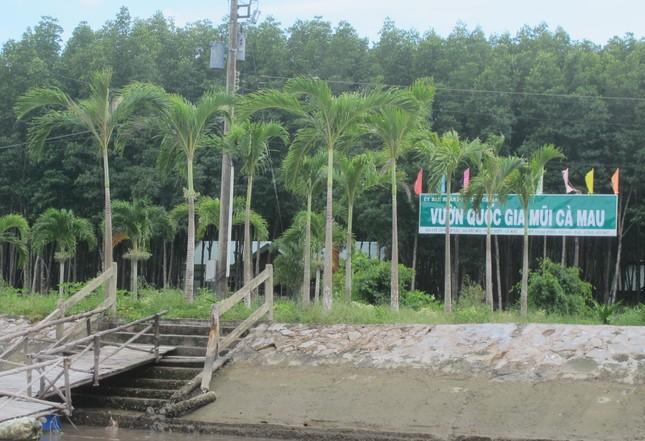Cách chức giám đốc, phó giám đốc vườn quốc gia Mũi Cà Mau ảnh 1