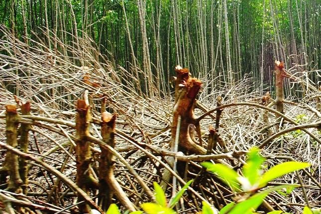 Di dời dân cư trú trái phép ra khỏi Vườn Quốc gia Mũi Cà Mau ảnh 1