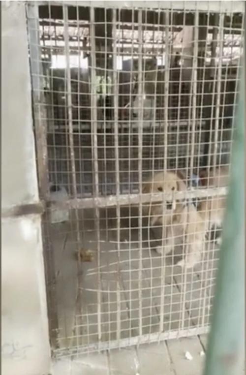 Không phải Cá Tháng Tư đâu: Sở thú treo biển chuồng sư tử, nhưng bên trong là… chú chó con ảnh 2
