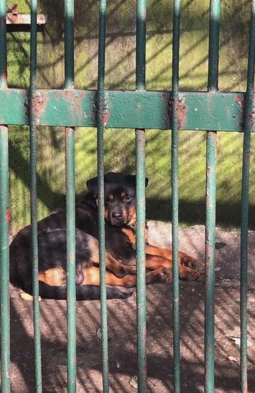 Không phải Cá Tháng Tư đâu: Sở thú treo biển chuồng sư tử, nhưng bên trong là… chú chó con ảnh 4