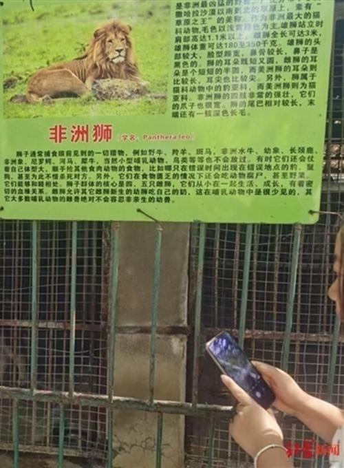 Không phải Cá Tháng Tư đâu: Sở thú treo biển chuồng sư tử, nhưng bên trong là… chú chó con ảnh 1