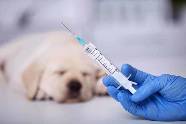 75 người ở Chile bị tiêm vắc-xin dành cho chó nhưng bác sĩ vẫn cố cãi chẳng sao cả ảnh 1