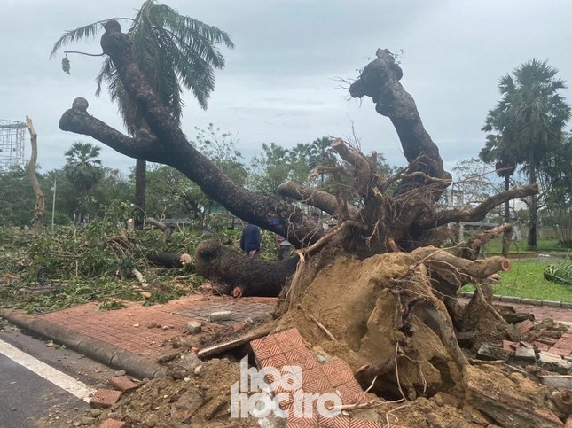 Thừa Thiên - Huế: Trạm xe buýt bị hư hại, cây xà cừ trăm tuổi bật gốc vì bão số 13 ảnh 9