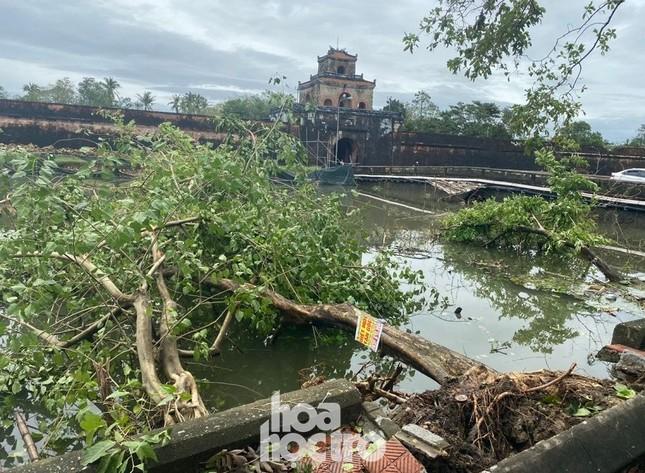 Thừa Thiên - Huế: Trạm xe buýt bị hư hại, cây xà cừ trăm tuổi bật gốc vì bão số 13 ảnh 7