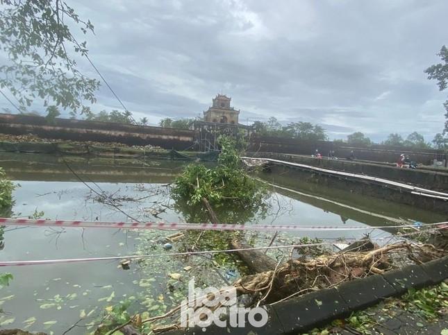 Thừa Thiên - Huế: Trạm xe buýt bị hư hại, cây xà cừ trăm tuổi bật gốc vì bão số 13 ảnh 8
