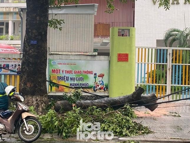 Thừa Thiên - Huế: Trạm xe buýt bị hư hại, cây xà cừ trăm tuổi bật gốc vì bão số 13 ảnh 5