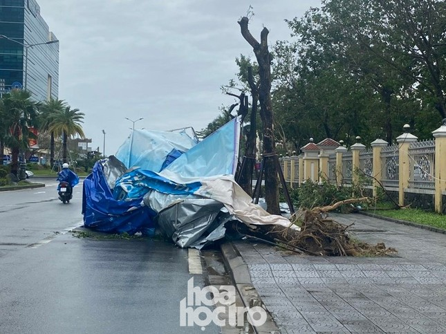 Thừa Thiên - Huế: Trạm xe buýt bị hư hại, cây xà cừ trăm tuổi bật gốc vì bão số 13 ảnh 3