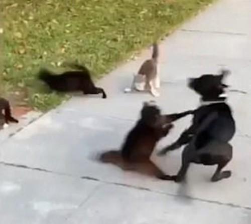"""Can đảm hơn là thắng: """"Team"""" mèo đường phố khiến chó to cũng sợ chạy mất hút ảnh 3"""